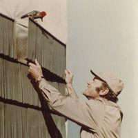 man using rustic shingle for siding